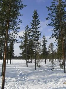 フィンランド 旅行