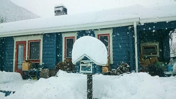 小俣邸 雪景色1