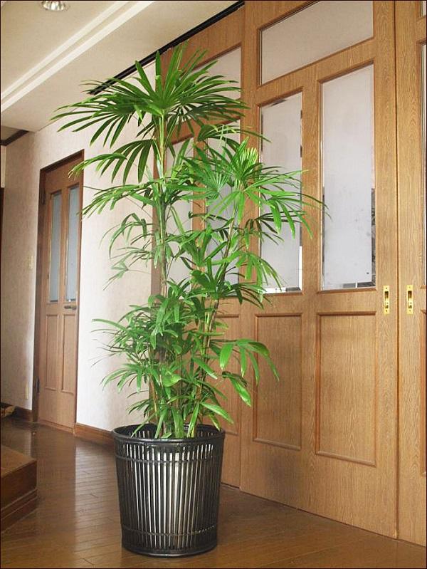 ホンカ 観葉植物3