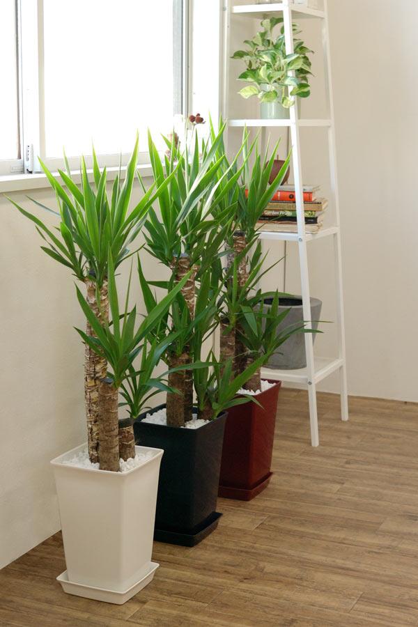 ホンカ 観葉植物5