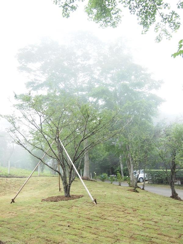 マイナス イオン カーテン 山中湖