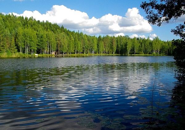 HONKA森林2