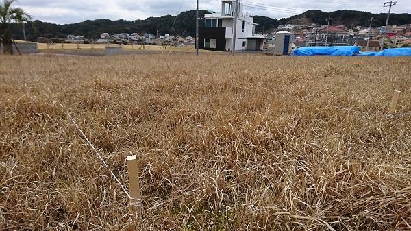 千葉県勝浦市 ログハウス 地縄貼り (2)