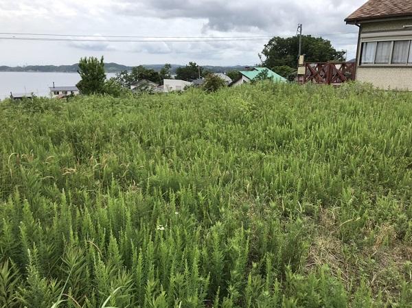 キグミ ホンカ 草刈 本物 木の家 ログハウス