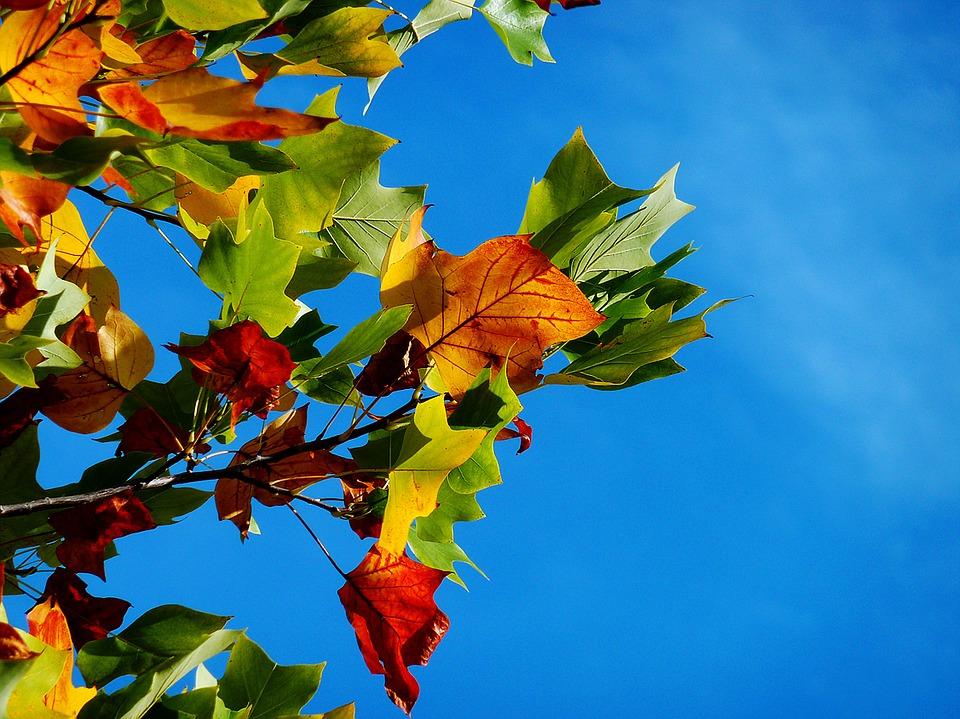 autumn-974882_960_720